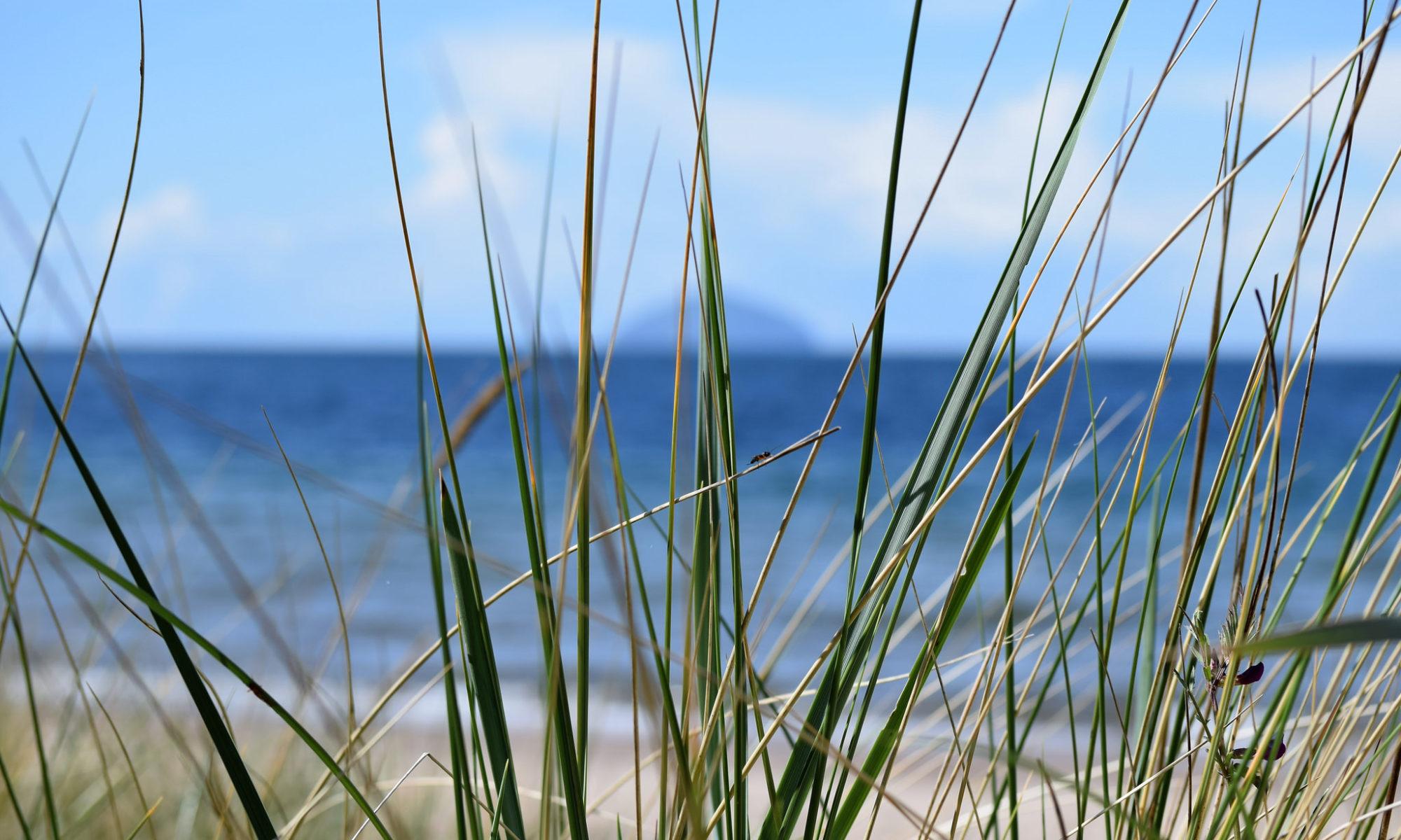 tall grass at beach